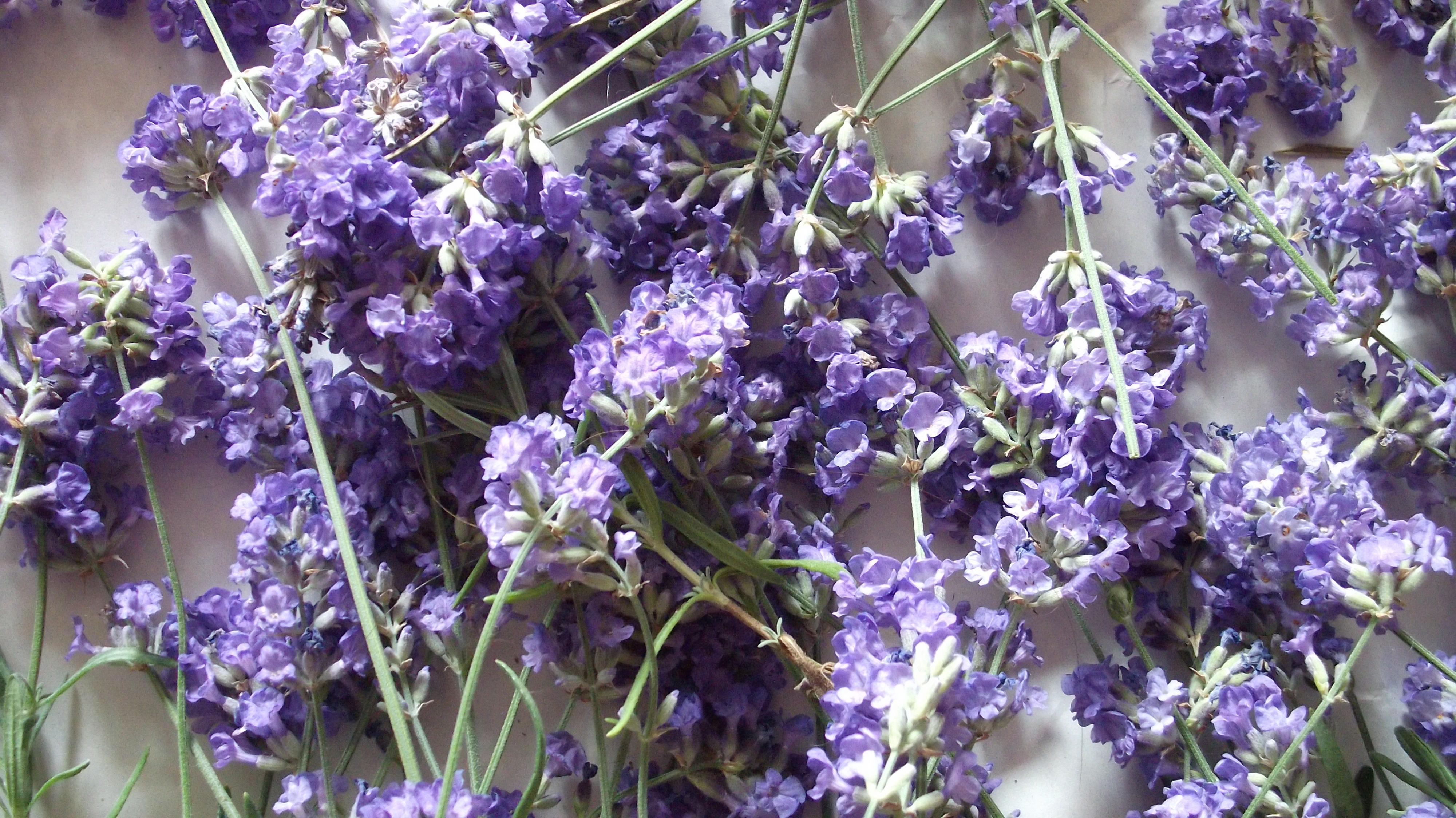 Http Karonv Wordpress Com 2011 07 07 Lavender Recipes For Beauty
